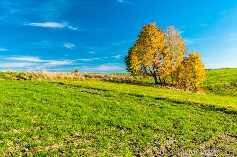 jesień, Roztocze, Nikon D700, krajobraz, landscape, drzewno, tree, autumn, colors of autumn, kolory jesieni