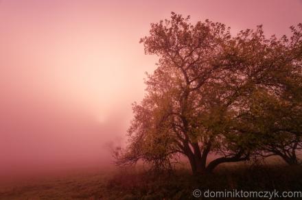 Dachany, Roztocze, świt, dawn, Nikon D700, mgła, fog, wschód słońca, sunrise, krajobraz, landscape, black and white, B&W, black&white