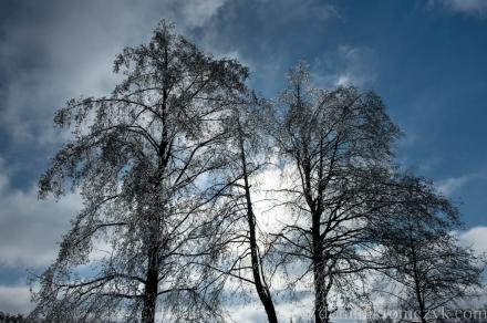 Roztocze, Nikon D700, Nikon D800, zima, winter, Kowalówka, krajobraz, landscape, sopel, icicle, sople, icicles,