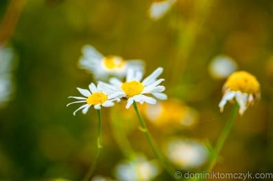 Kwiaty, flowers, kwiat, flower, natura, nature, Nikon D700, Nikon D800, krajobraz, landscape
