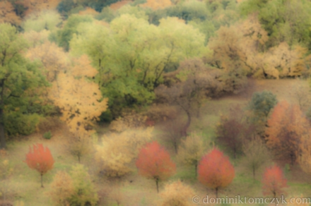 las w kolorach jesieni