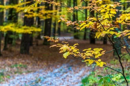 #autumnmorning, autumn, autumn morning, jesień, kolorowa jesień, las, Roztocze, #Roztocze, #autumn, #jesień, #kolorajesień, #las