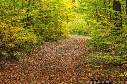 autumn, #autumn, autumn morning, #autumnmorning, jesień, #jesień, kolorowa jesień, #kolorowajesień, las, #las, Roztocze, #Roztocze, forest, #forest