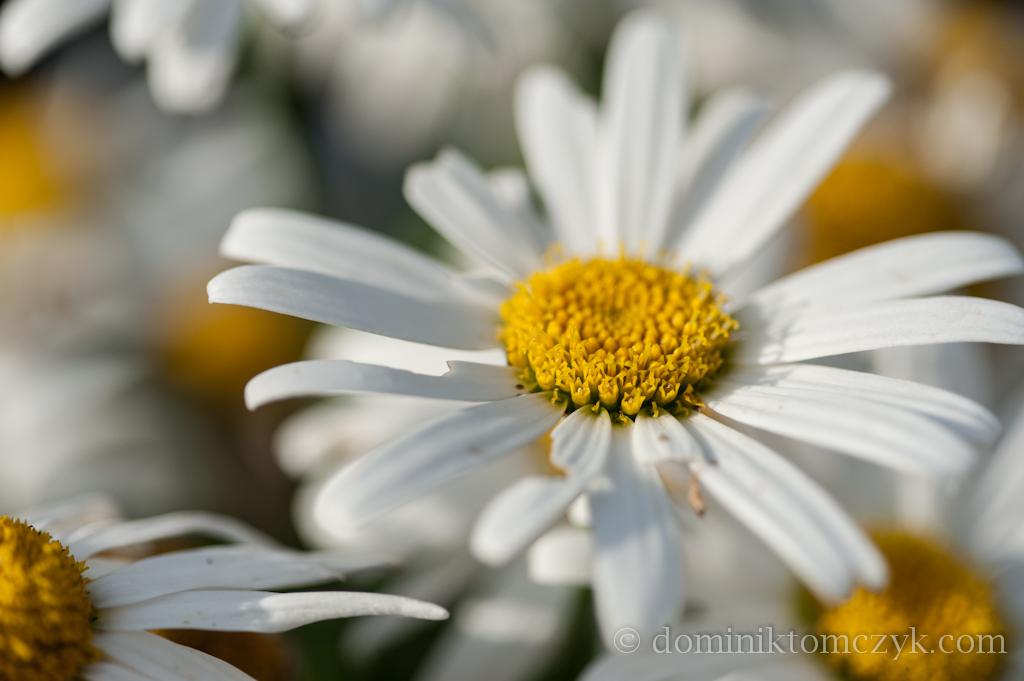 Kwiaty, #kwiaty, flowers, #flowers, kwiat, #kwiat, flower, #flower, natura, #natura, nature, nature, Nikon D700, Nikon D800, krajobraz, #krajobraz, landscape, #landscape