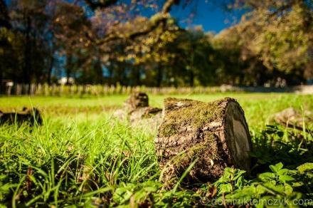 365PhotoDays, 365 PhotoDays,#365PhotoDays, 365 project,#365project, daily photo, #dailyphoto, one photo a day, #onephotoaday, 365days, Nikon D700, Nikon D800, #NikonD700, #NikonD800, #365PhotoDays, #365photoproject, #365project, #dailyphoto, #DominikTomczyk, #Nikon, #onephotoaday, Dominik Tomczyk, one photo a day, WarszawaNarol, #Narol, Roztocze, #Roztocze, Polska, #Polska, Poland, #Poland, wiosna, #wiosna, #spring, spring