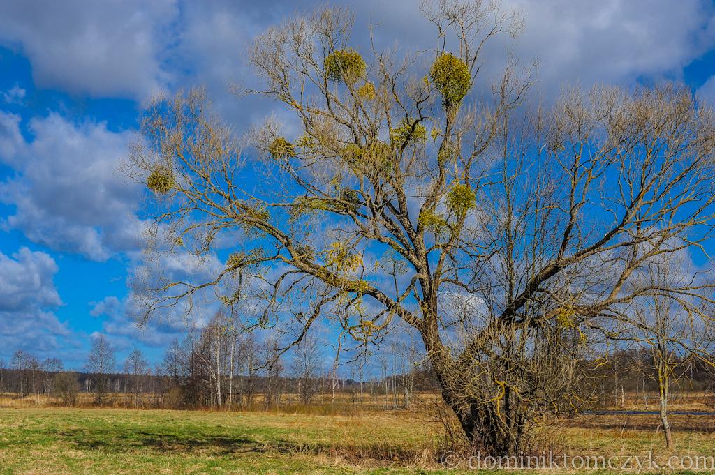 #365PhotoDays, #365photoproject, #365project, #dailyphoto, #DominikTomczyk, #Nikon, #onephotoaday, #spring, 365 photo project, 365 PhotoDays, 365 project, 365days, daily photo, Dominik Tomczyk, Nikon D700, Nikon D800, one photo a day, Morskie Oko, #MorskieOko, krajobraz, #krajobraz, landscape, #landscape,