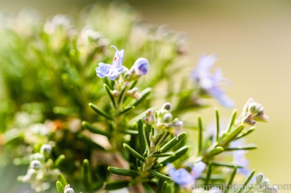 krajobraz, #krajobraz, natura, #natura, flowers, #flowers, kwiaty, #wkaity, landscape, #landscape, nature, #nature, Toskania, #Toskania, Tuscany, Tuscany, Włochy, #Włochy, Italy, #Italy, , 52weeks, #52weeks, 52 weeks project, #52weeksproject, daily photo, #dailyphoto, one photo a day, #onephotoaweek, 365 project, #365project, 365days, #365days, #52weeks, one photo a week, #onephotoaweek, weekly photo, #weeklyphoto, nature, #nature, 52 photoweeks project, #52photoweeksproject, Dominik Tomczyk, #DominikTomczyk