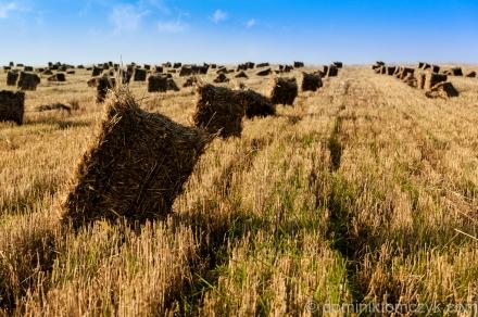 #365PhotoDays, #365project, #dailyphoto, #onephotoaday, #Polska, 365 PhotoDays, 365 project, 365days, daily photo, fotografia, landscape, Nikon D700, one photo a day, photography, Poland, #Poland, żniwa, #żniwa, harvest, #harvest