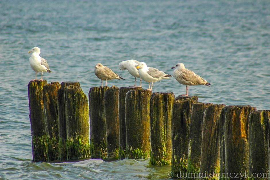 sea, morze, birds, ptaki, 26_DSC_1742