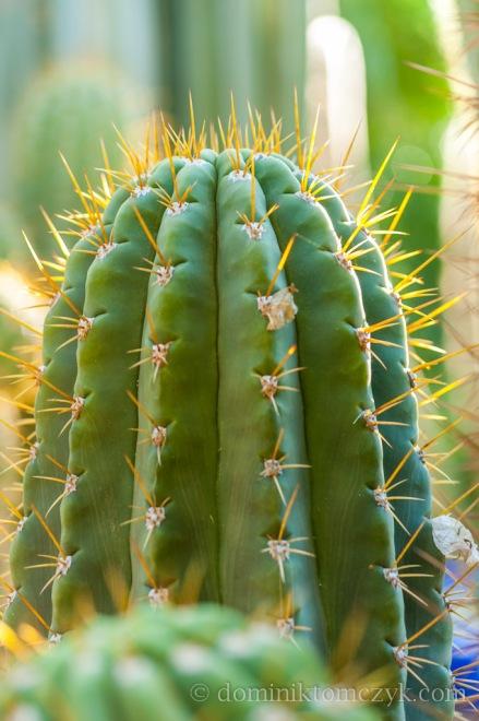 Jardin Majorelle, #JardinMajorelle, Paul Berg, #PaulBerg, Pierre Bergé, #PierreBergé, drzewa, #drzewa, flowers, #flowers, garden, #garden, kwiaty, #kwiaty, Marakesz, #Marakesz, Maroko, #Maroko, Marrakech, #Marrakech, Marrakesz, #Marrakesz, Morocco, #Marocco, ogród, #ogród, YSL, #YSL, Yves Saint Laurent, #YvesSaintLaurent, kaktus, #kaktus, cactus, #cactus