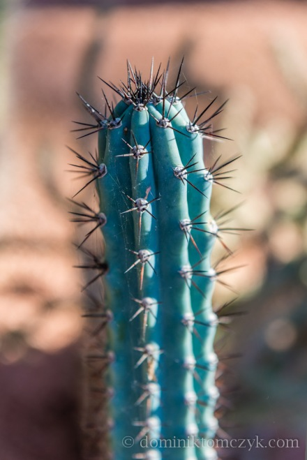 Jardin Majorelle, #JardinMajorelle, Paul Berg, #PaulBerg, Pierre Bergé, #PierreBergé, drzewa, #drzewa, flowers, #flowers, garden, #garden, kwiaty, #kwiaty, Marakesz, #Marakesz, Maroko, #Maroko, Marrakech, #Marrakech, Marrakesz, #Marrakesz, Morocco, #Marocco, ogród, #ogród, YSL, #YSL, Yves Saint Laurent, #YvesSaintLaurent