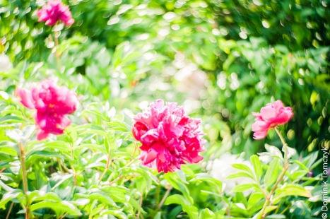 Roztocze, kwiaty, natura, Petzval 85mm, -8683