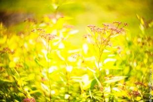 Roztocze, kwiaty, natura, Petzval 85mm, -8695