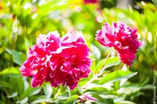 Roztocze, kwiaty, natura, Petzval 85mm, -8698