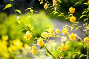 Roztocze, kwiaty, natura, Petzval 85mm, -8699