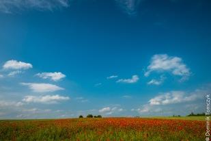 Roztocze, kwiaty, natura, maki, -83473