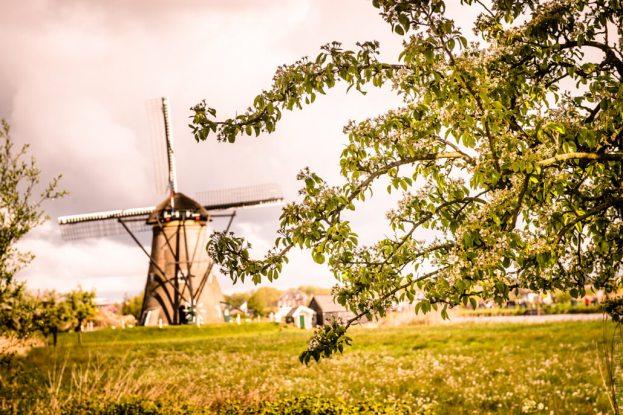 Holandia- Kinderdijk-80488