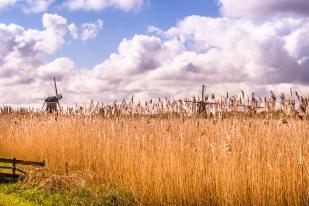Holandia- Kinderdijk-80489